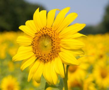 lana-talk-flower-picture
